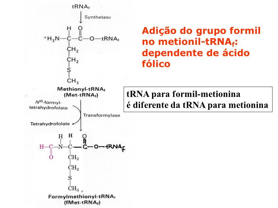 Adição do grupo formil no metionil-tRNAf: dependente de ácido fólico