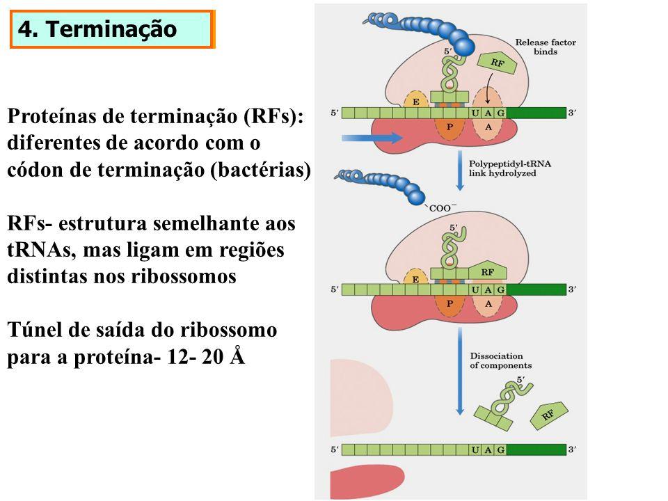 4. TerminaçãoProteínas de terminação (RFs): diferentes de acordo com o. códon de terminação (bactérias)