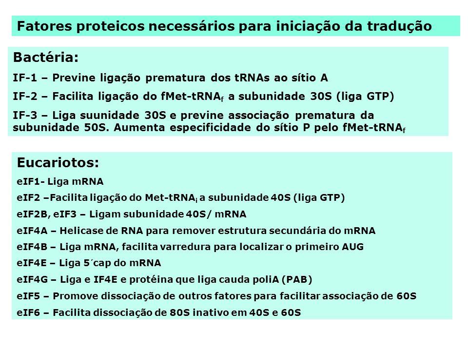 Fatores proteicos necessários para iniciação da tradução