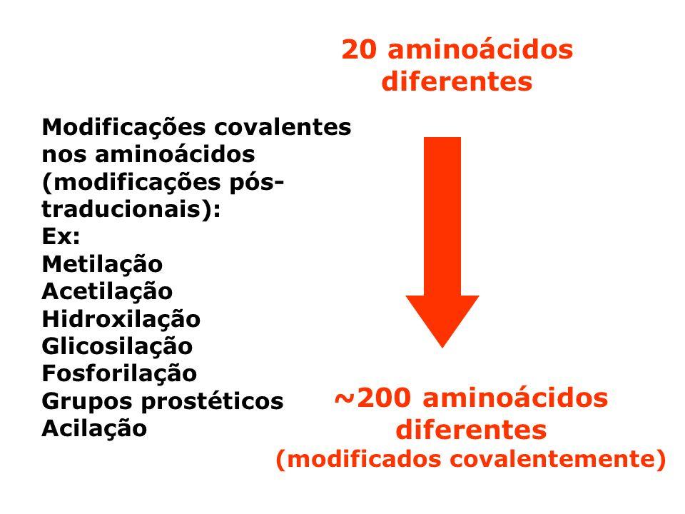 20 aminoácidos diferentes ~200 aminoácidos diferentes