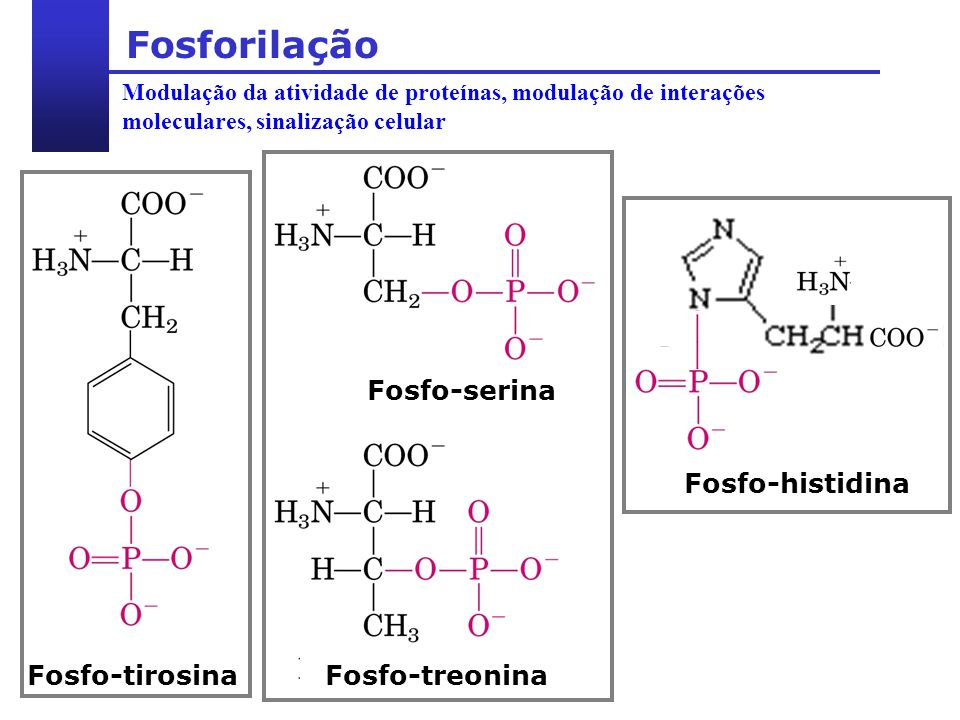 Fosforilação Fosfo-serina Fosfo-treonina Fosfo-tirosina