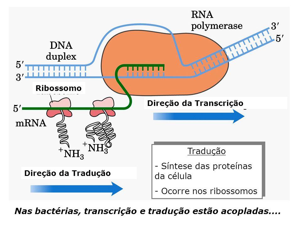 Síntese das proteínas da célula
