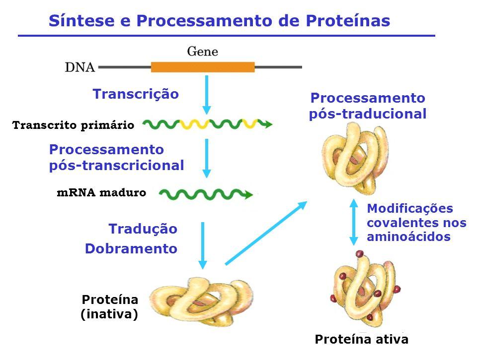 Síntese e Processamento de Proteínas