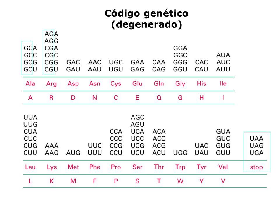 Código genético (degenerado)