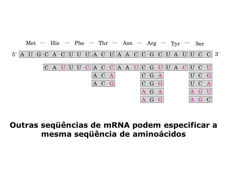 Outras seqüências de mRNA podem especificar a mesma seqüência de aminoácidos