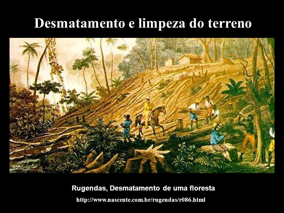 Desmatamento e limpeza do terreno