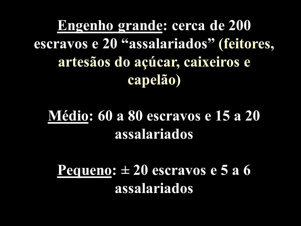 Médio: 60 a 80 escravos e 15 a 20 assalariados