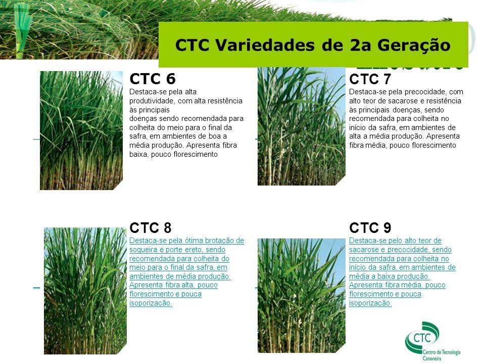 CTC Variedades de 2a Geração