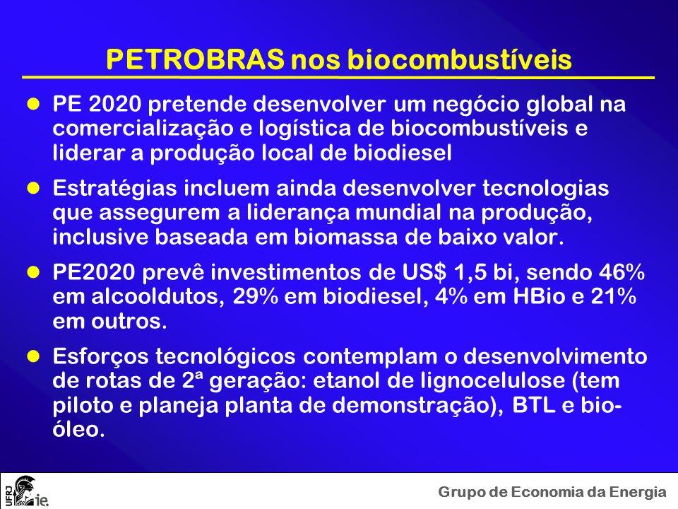PETROBRAS nos biocombustíveis