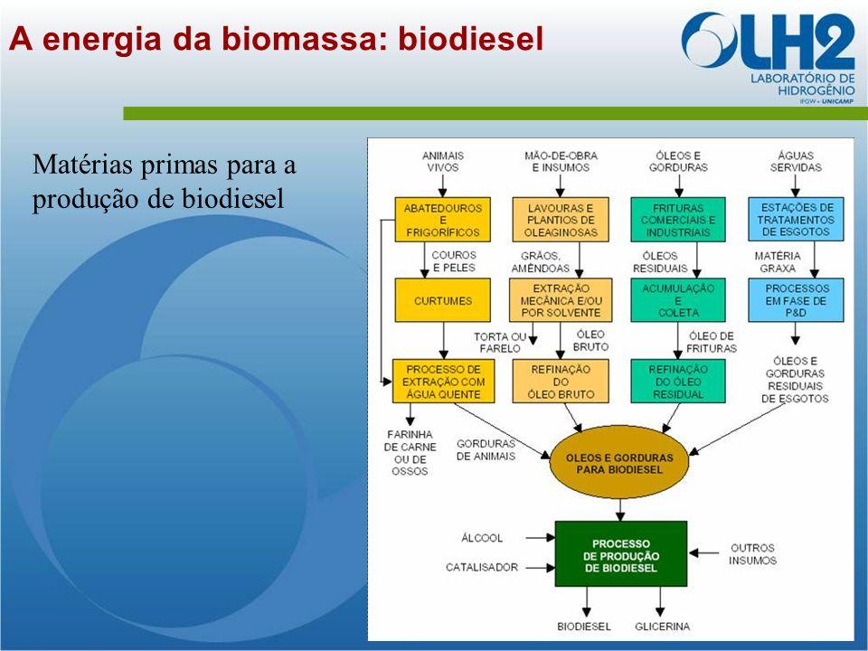 A energia da biomassa: biodiesel