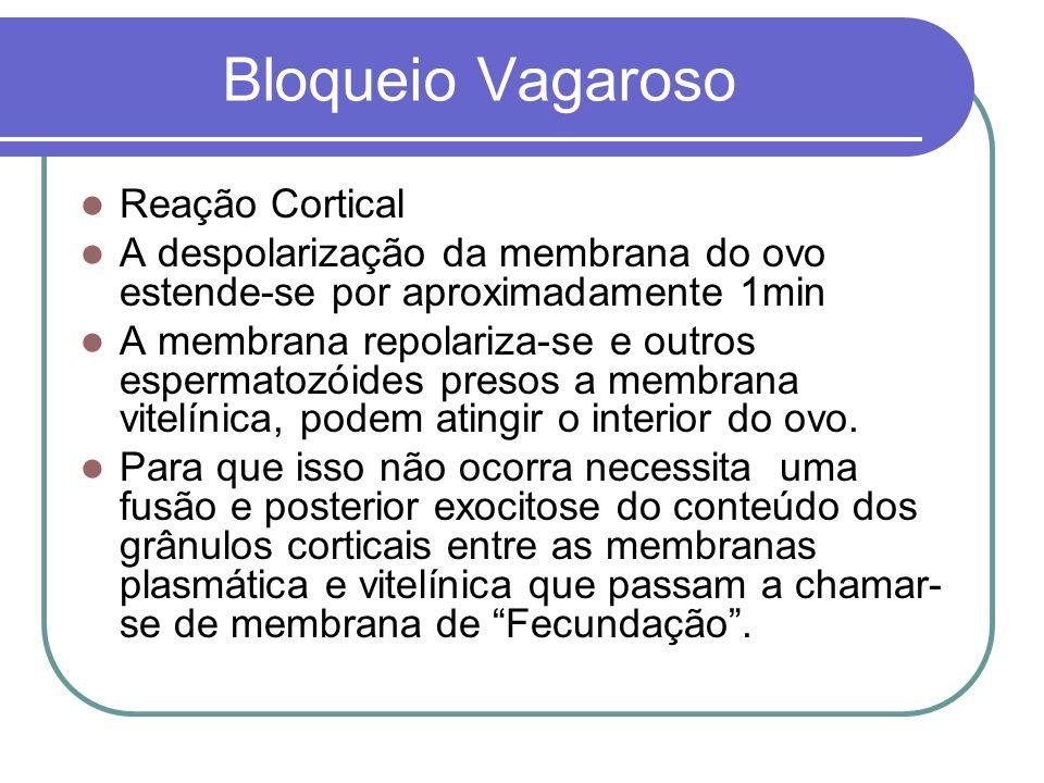 Bloqueio Vagaroso Reação Cortical