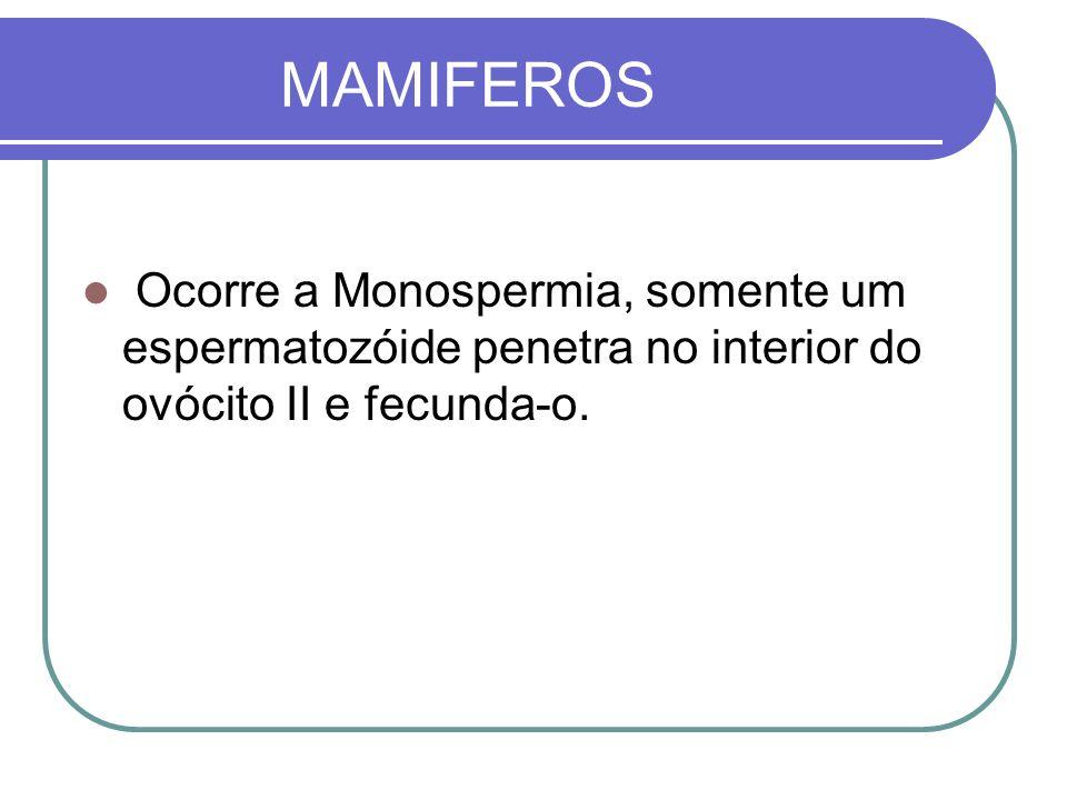 MAMIFEROSOcorre a Monospermia, somente um espermatozóide penetra no interior do ovócito II e fecunda-o.
