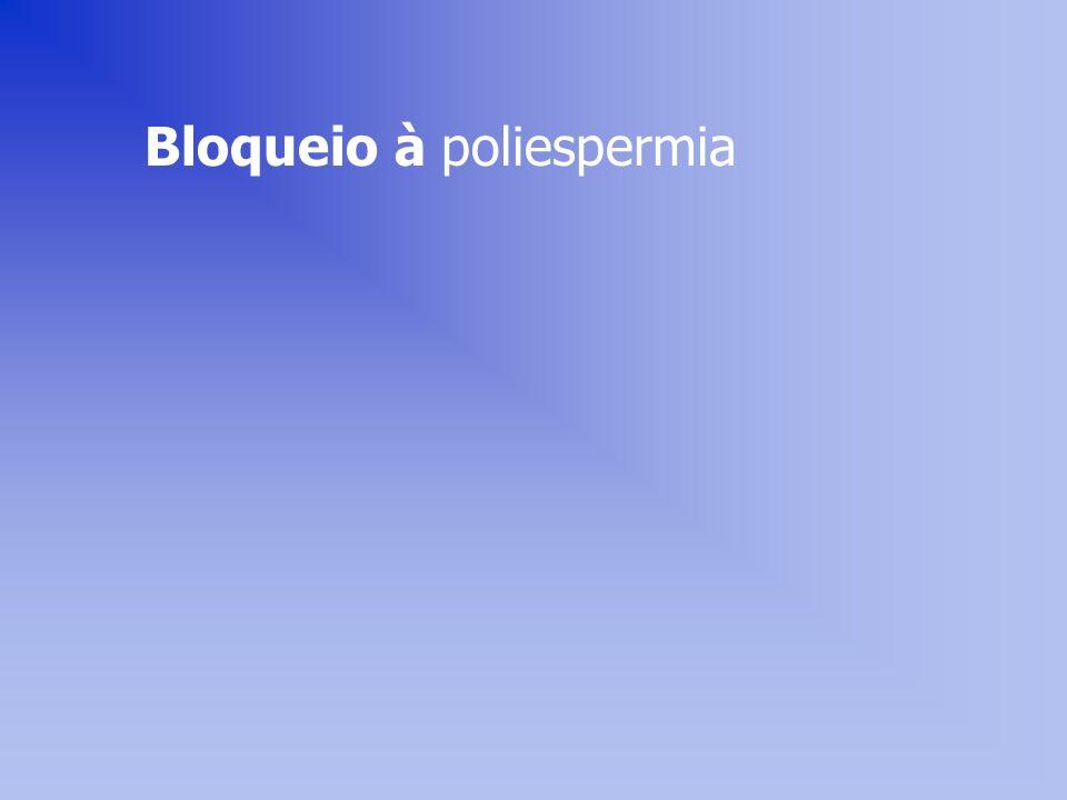 Bloqueio à poliespermia