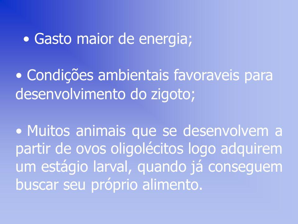 Gasto maior de energia;
