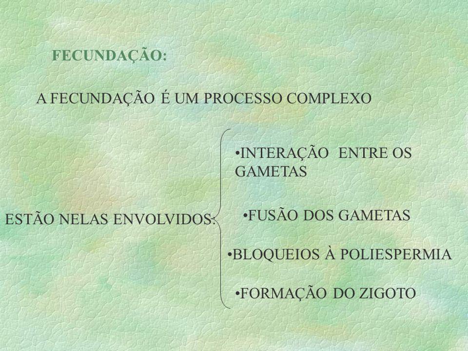 FECUNDAÇÃO: A FECUNDAÇÃO É UM PROCESSO COMPLEXO. INTERAÇÃO ENTRE OS GAMETAS. FUSÃO DOS GAMETAS. ESTÃO NELAS ENVOLVIDOS:
