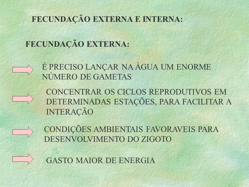 FECUNDAÇÃO EXTERNA E INTERNA: