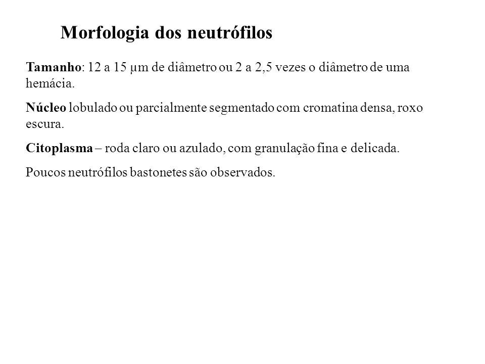 Morfologia dos neutrófilos