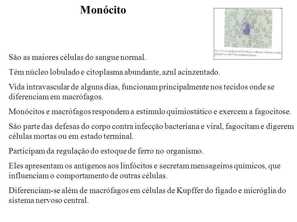 Monócito São as maiores células do sangue normal.