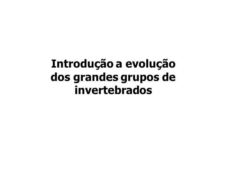 Introdução a evolução dos grandes grupos de invertebrados