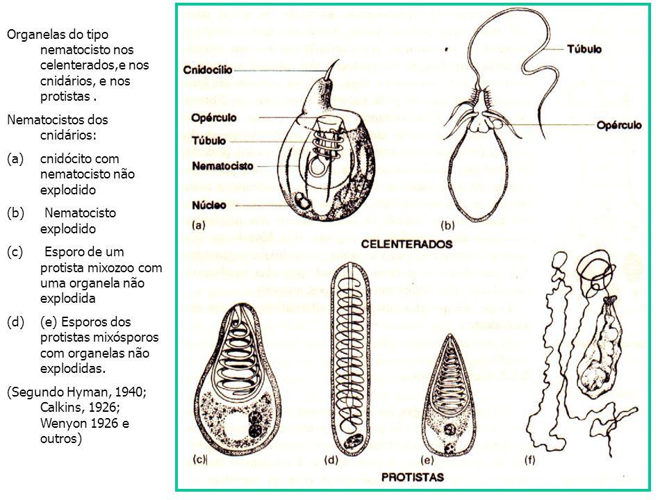 Organelas do tipo nematocisto nos celenterados,e nos cnidários, e nos protistas .