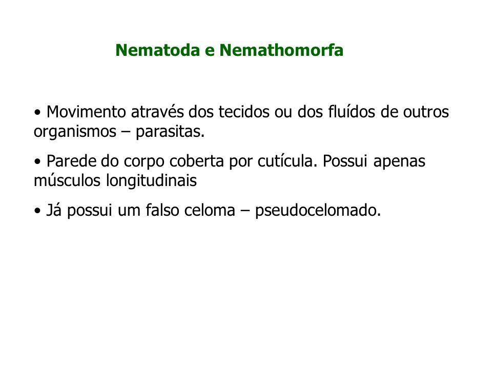 Nematoda e Nemathomorfa
