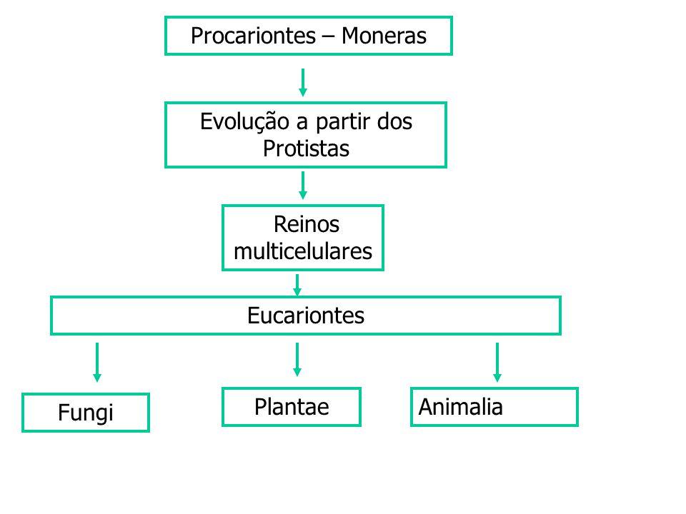 Procariontes – Moneras