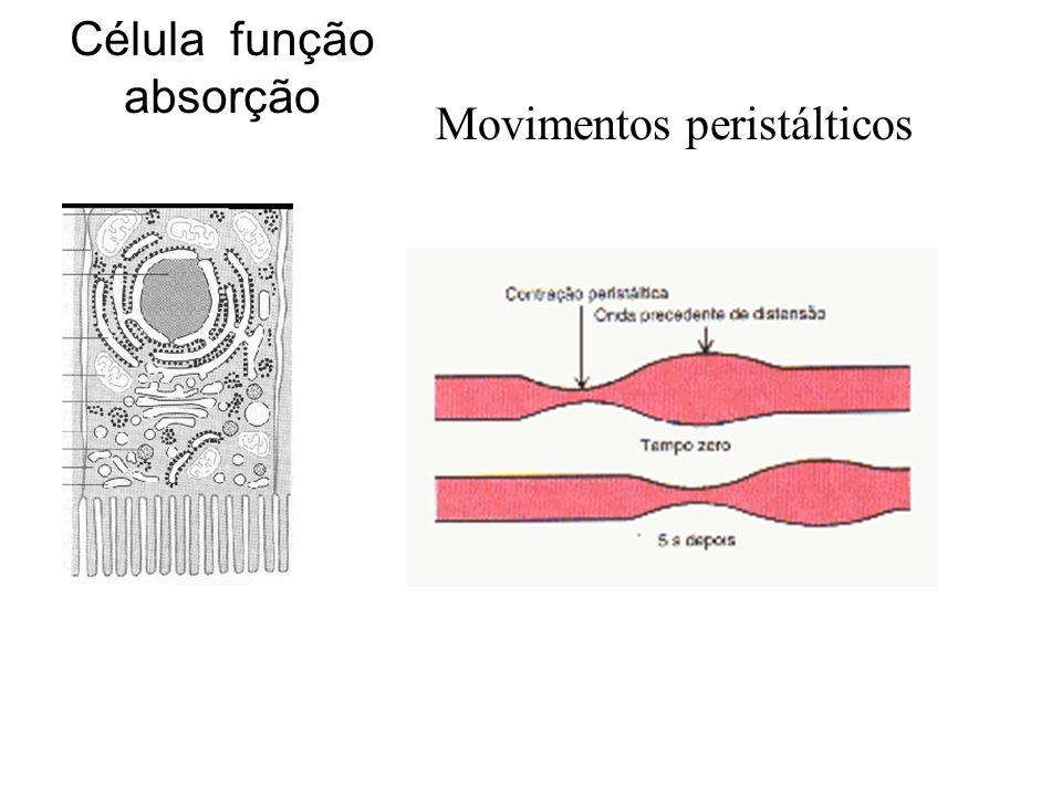 Célula função absorção
