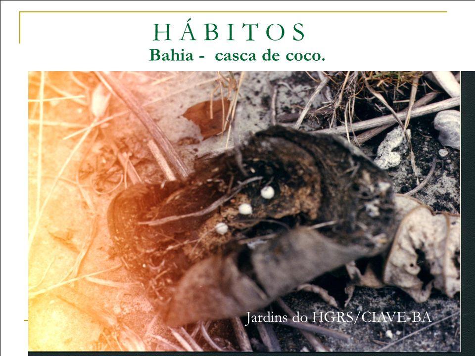 H Á B I T O S Bahia - casca de coco. Jardins do HGRS/CIAVE-BA