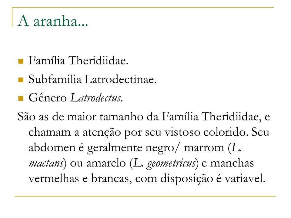 A aranha... Família Theridiidae. Subfamilia Latrodectinae.