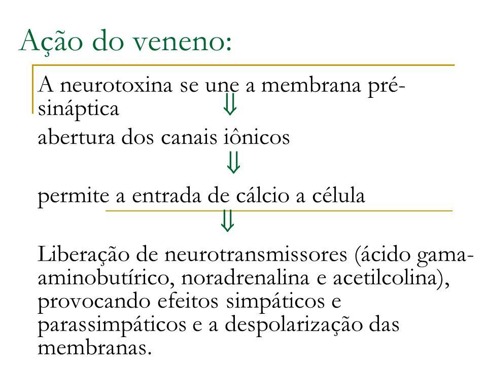 Ação do veneno: A neurotoxina se une a membrana pré-sináptica 