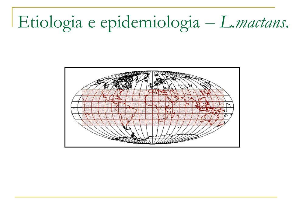 Etiologia e epidemiologia – L.mactans.