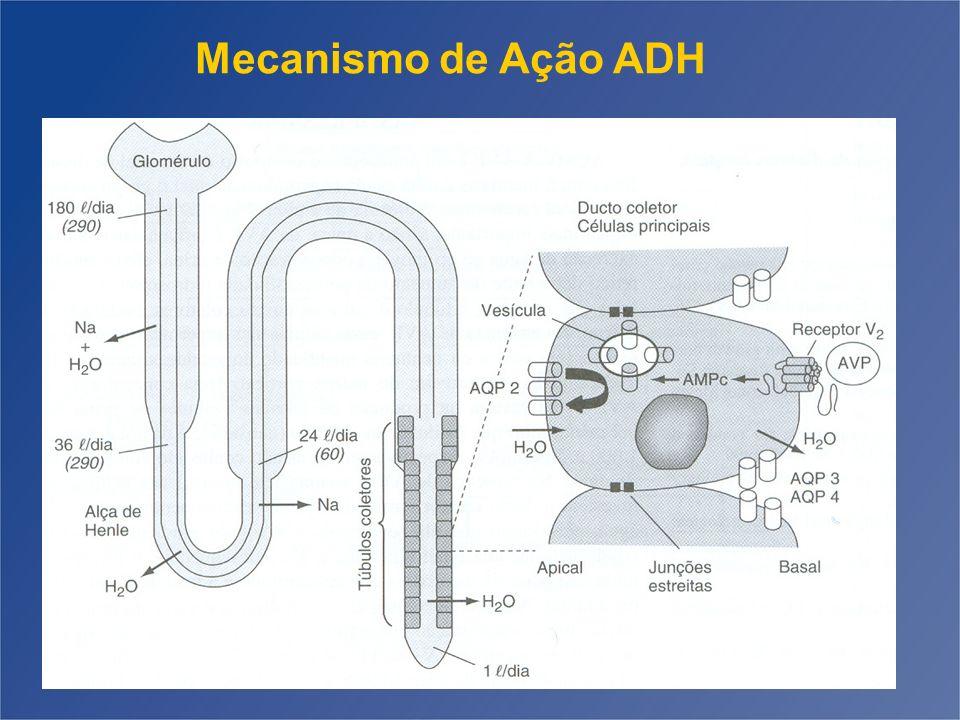 Mecanismo de Ação ADH