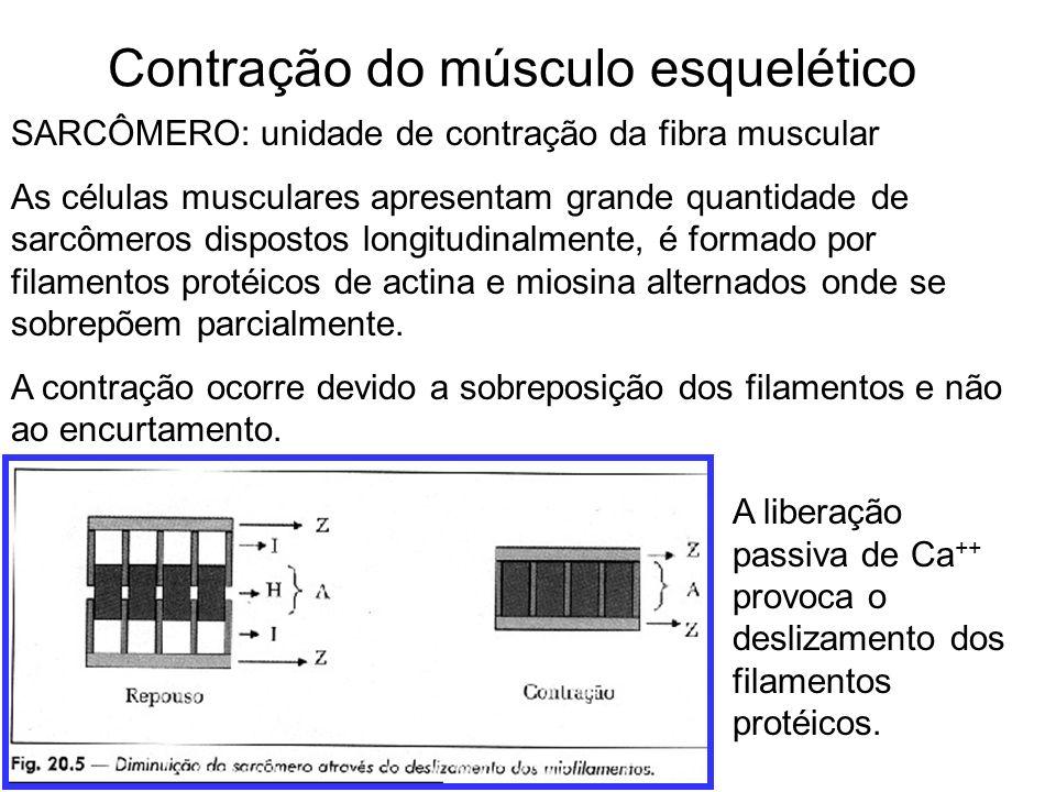 Contração do músculo esquelético