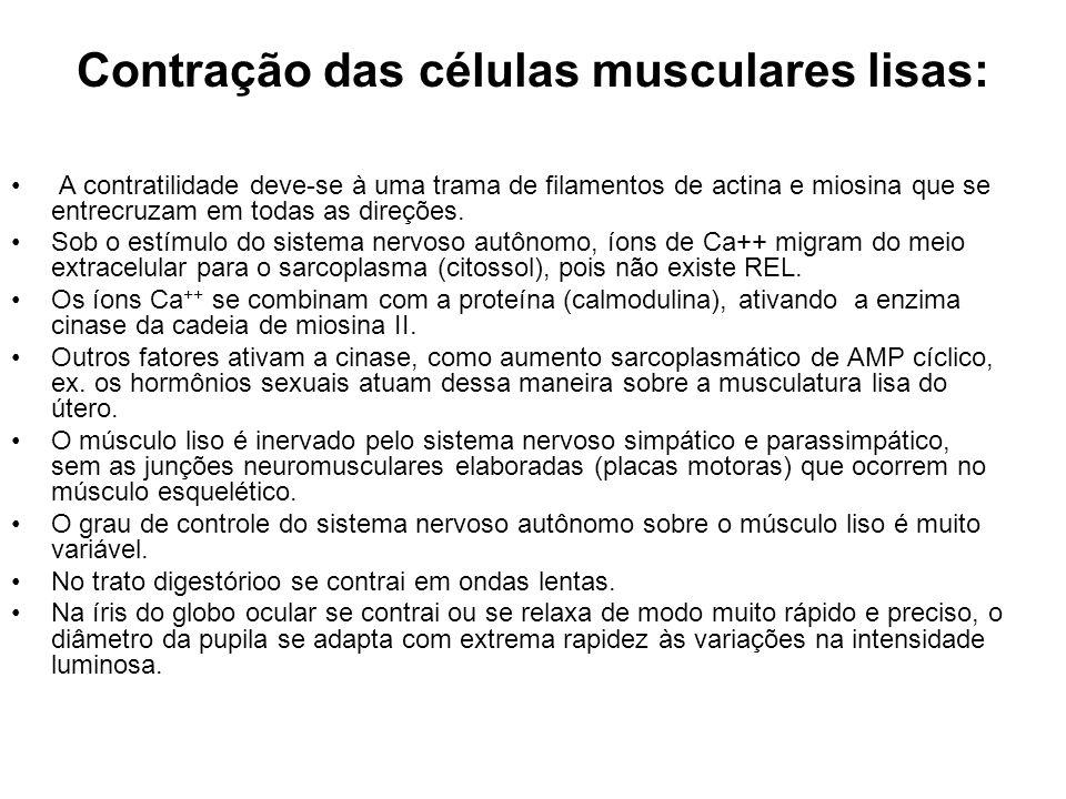Contração das células musculares lisas: