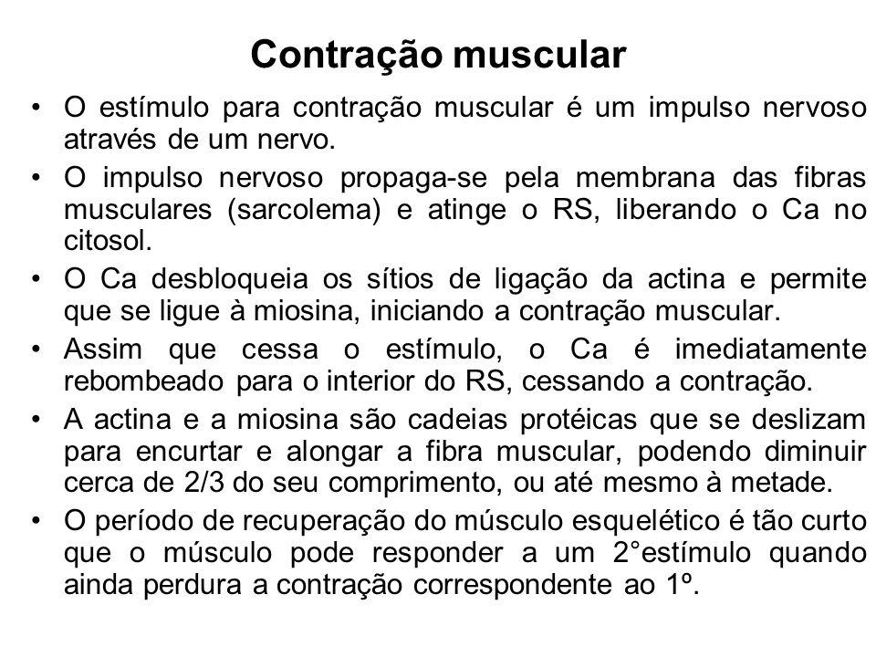 Contração muscular O estímulo para contração muscular é um impulso nervoso através de um nervo.