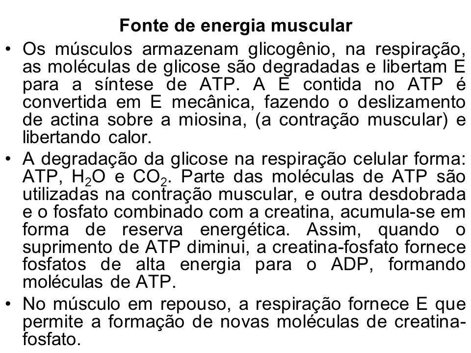 Fonte de energia muscular