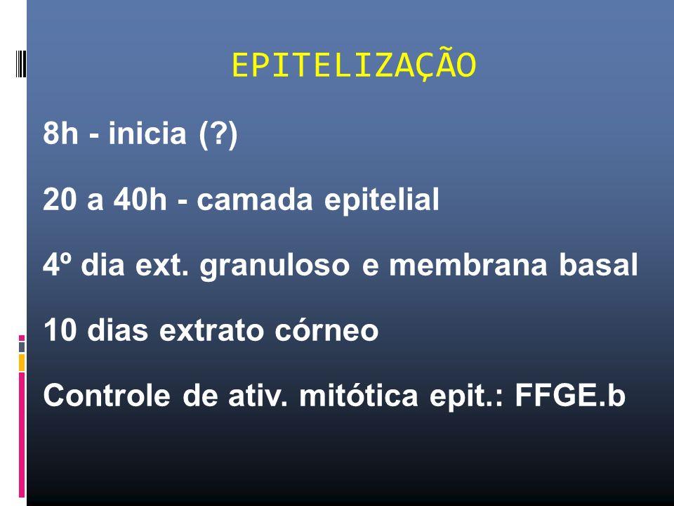 EPITELIZAÇÃO 8h - inicia ( ) 20 a 40h - camada epitelial