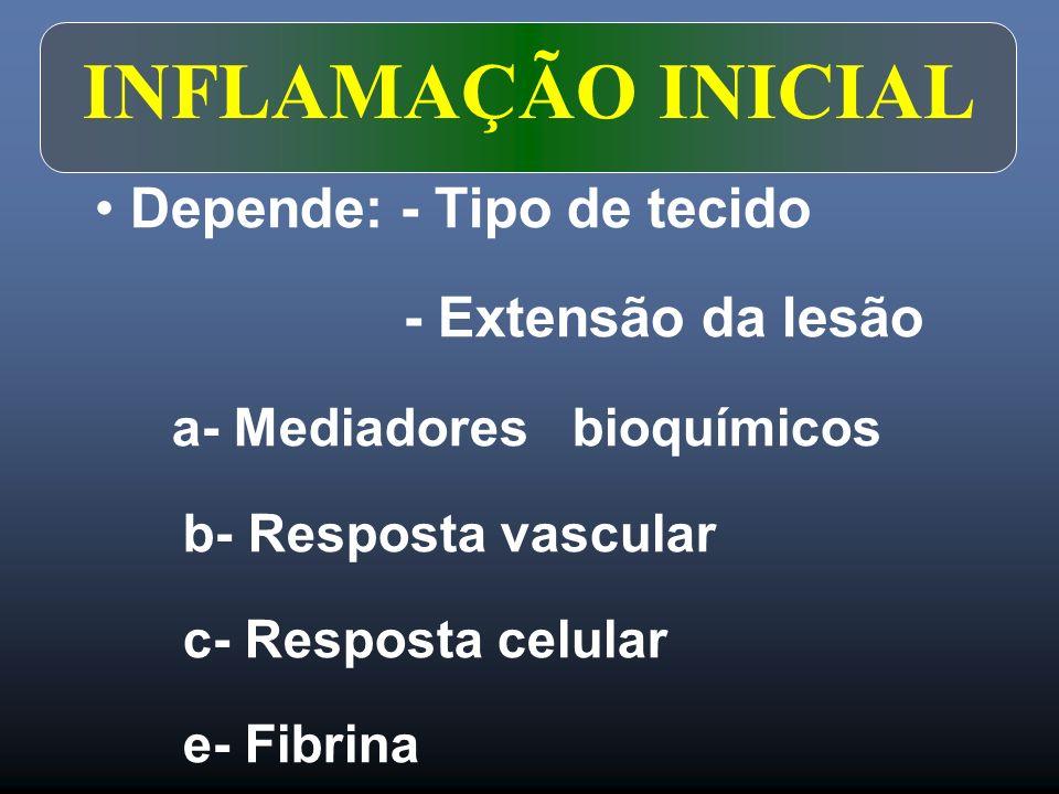 INFLAMAÇÃO INICIAL Depende: - Tipo de tecido - Extensão da lesão