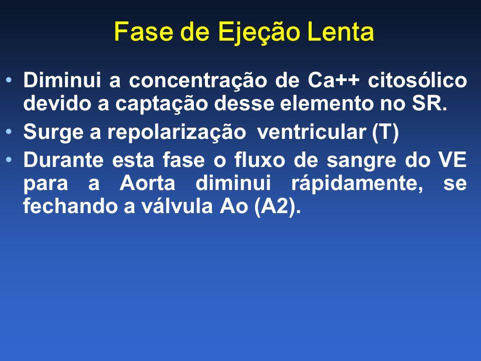 Fase de Ejeção Lenta Diminui a concentração de Ca++ citosólico devido a captação desse elemento no SR.