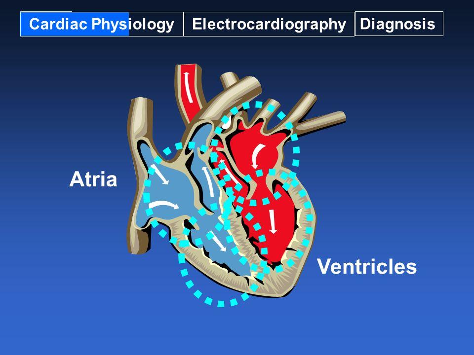 Cardiac Physiology Electrocardiography Diagnosis Atria Ventricles