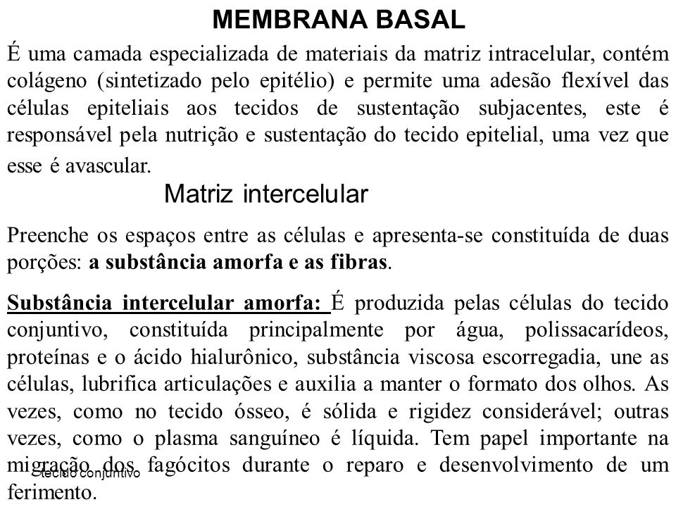 MEMBRANA BASAL Matriz intercelular