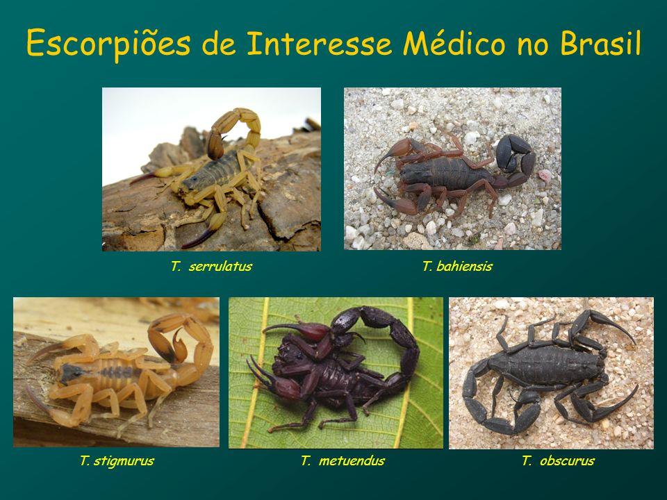 Escorpiões de Interesse Médico no Brasil