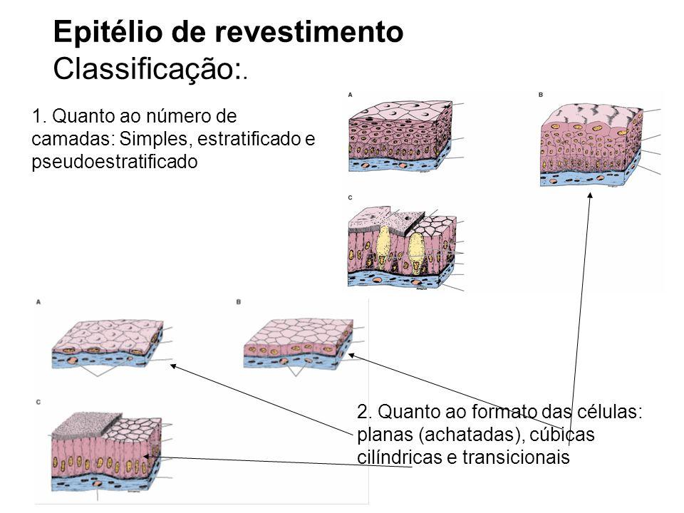 Epitélio de revestimento Classificação:.