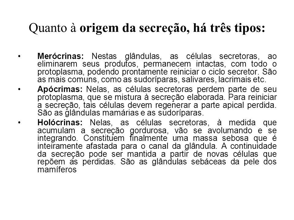 Quanto à origem da secreção, há três tipos: