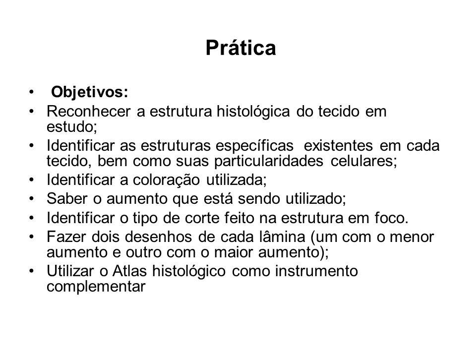 Prática Objetivos: Reconhecer a estrutura histológica do tecido em estudo;