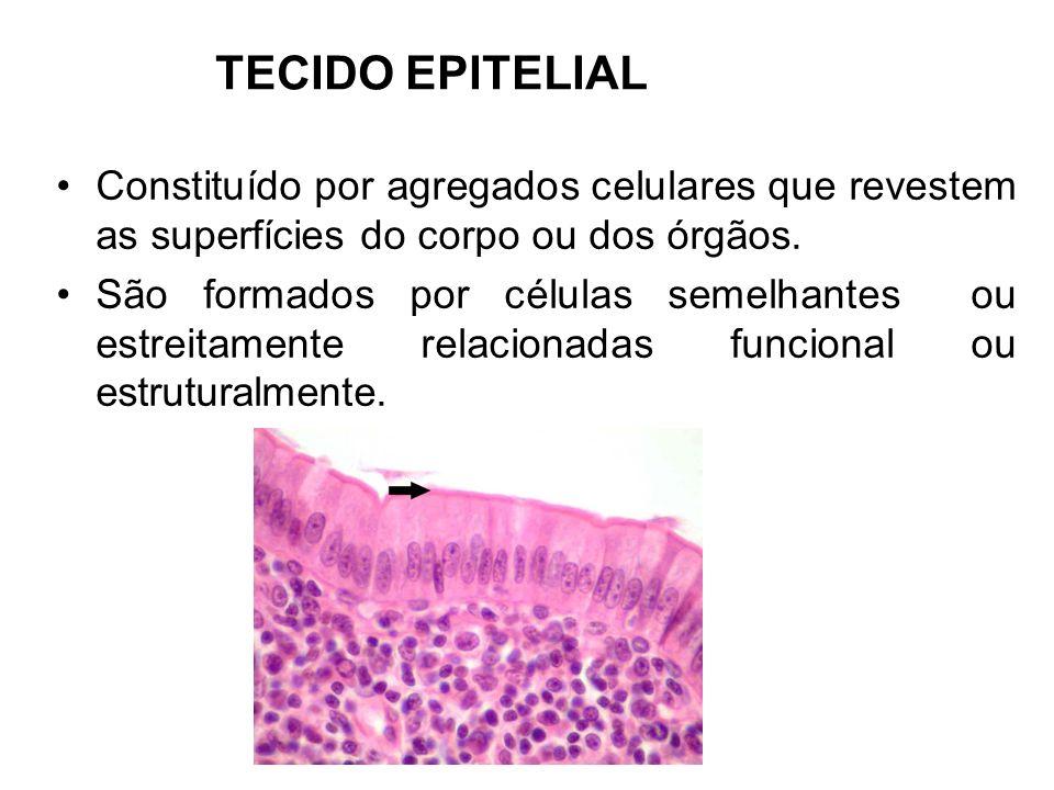 TECIDO EPITELIAL Constituído por agregados celulares que revestem as superfícies do corpo ou dos órgãos.