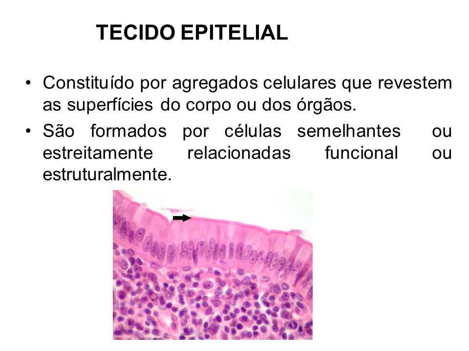 TECIDO EPITELIALConstituído por agregados celulares que revestem as superfícies do corpo ou dos órgãos.