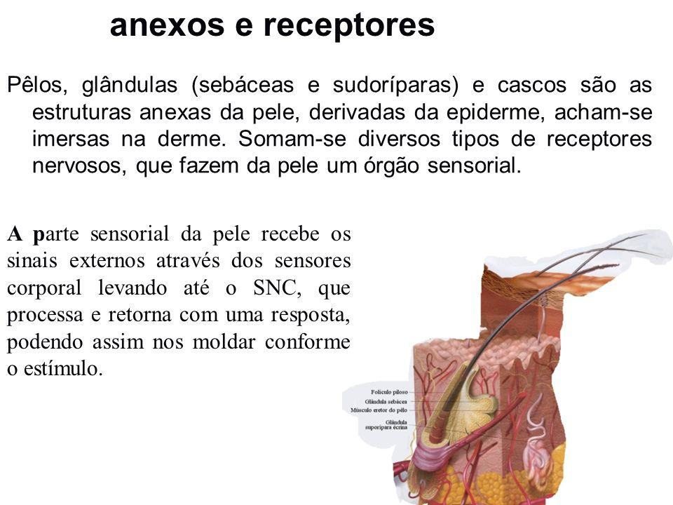 anexos e receptores