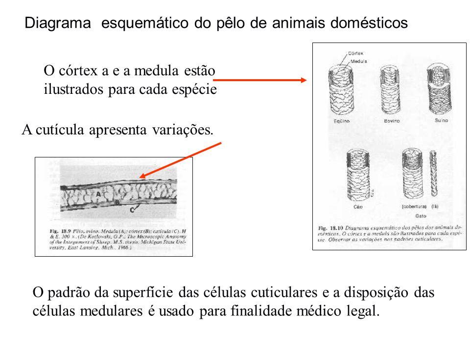 Diagrama esquemático do pêlo de animais domésticos
