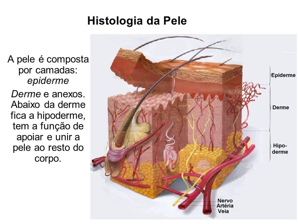 A pele é composta por camadas: epiderme